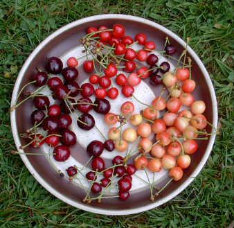 Unripe Strawberries FRUIT PICTURES - DIVER...