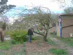 restoring the orchard, secret garden, glenfield, apr 20192019,
